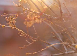 Winter - 14